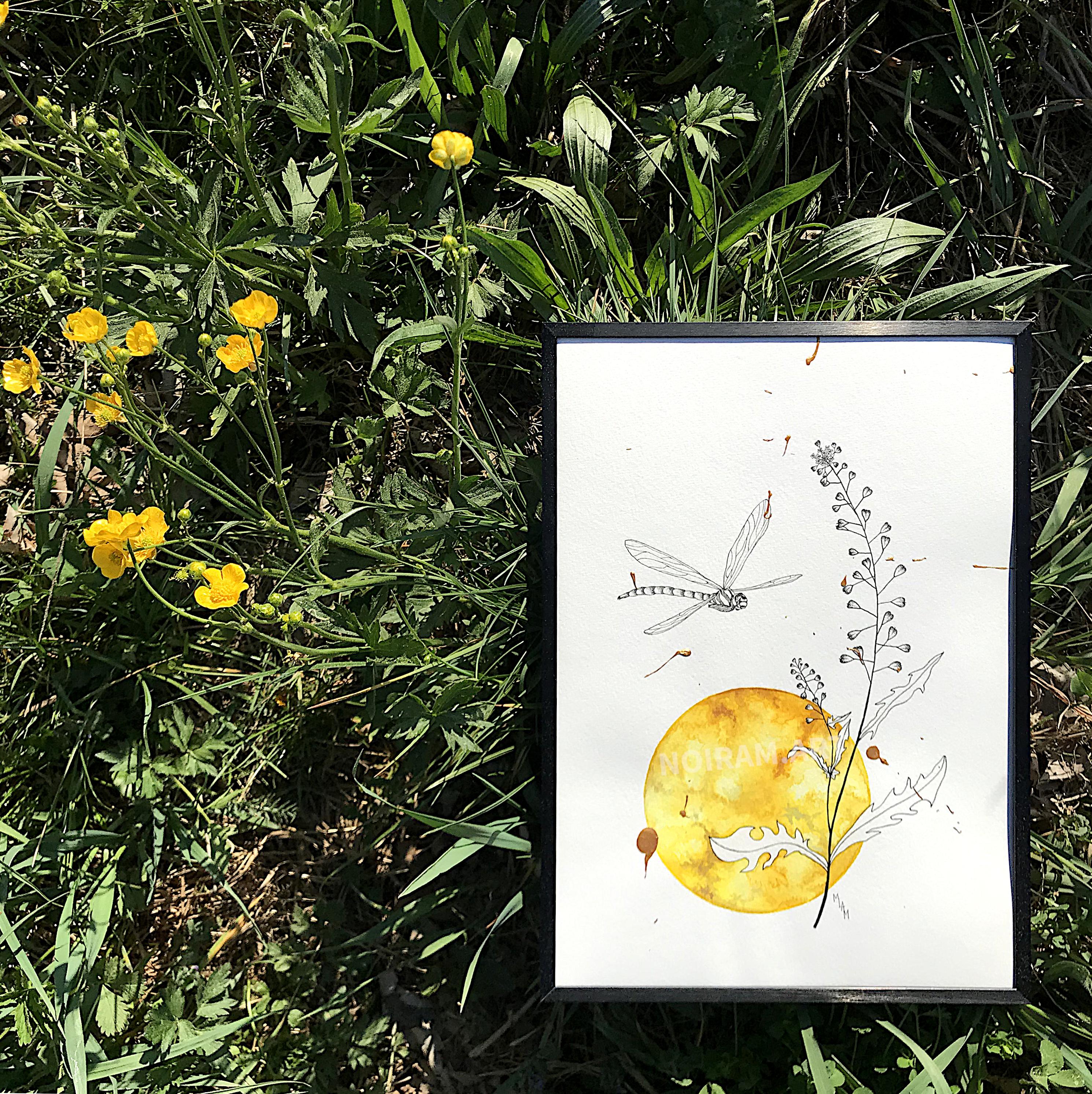 L'or de mes jours aquarelle mlam noiram Poncet libellule bourse à pasteur soleil planète or