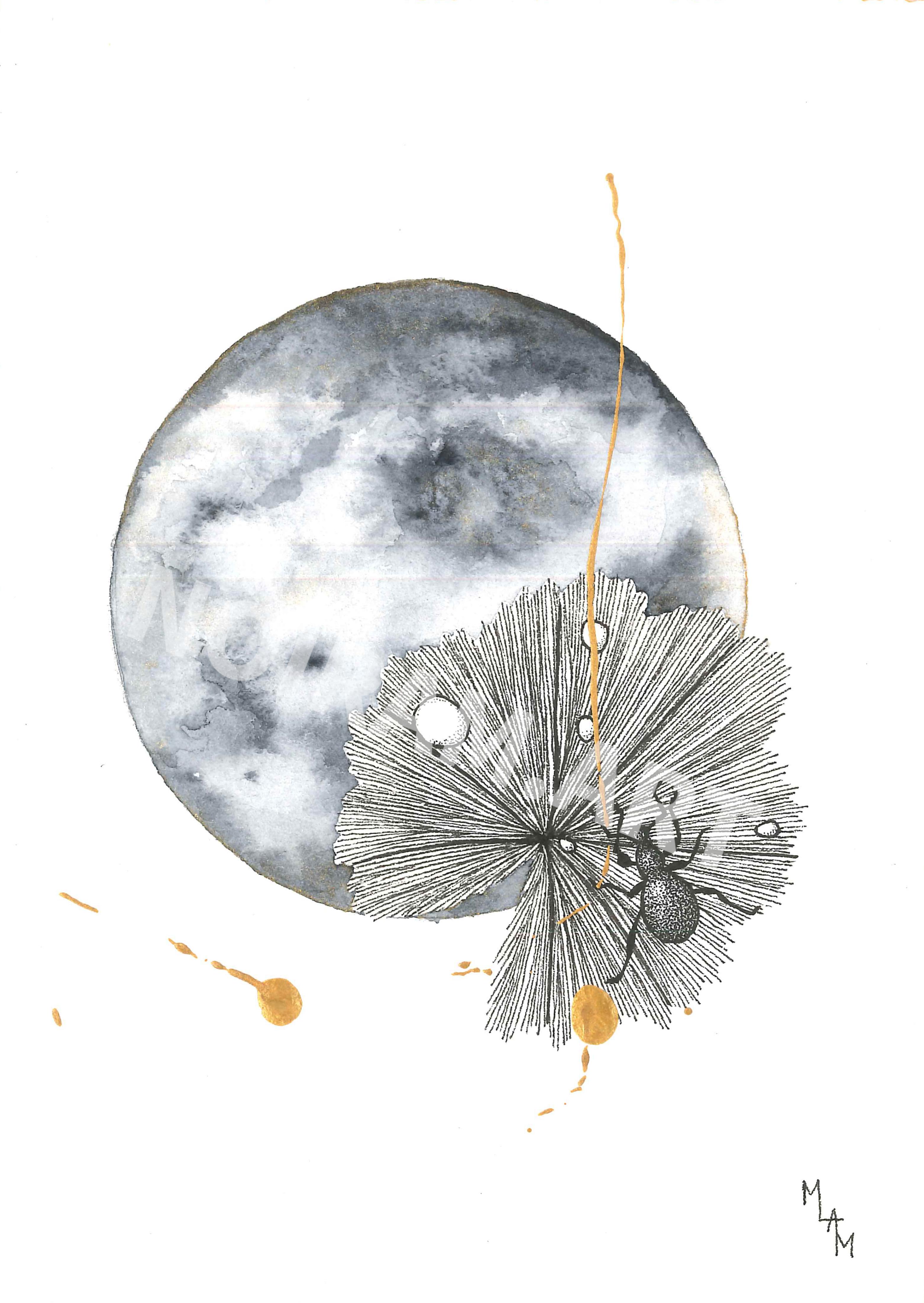 Aquarelle la métamorphose d'Hadès scarabé alchémille planète plante mlam noiram marion-lorraine poncet