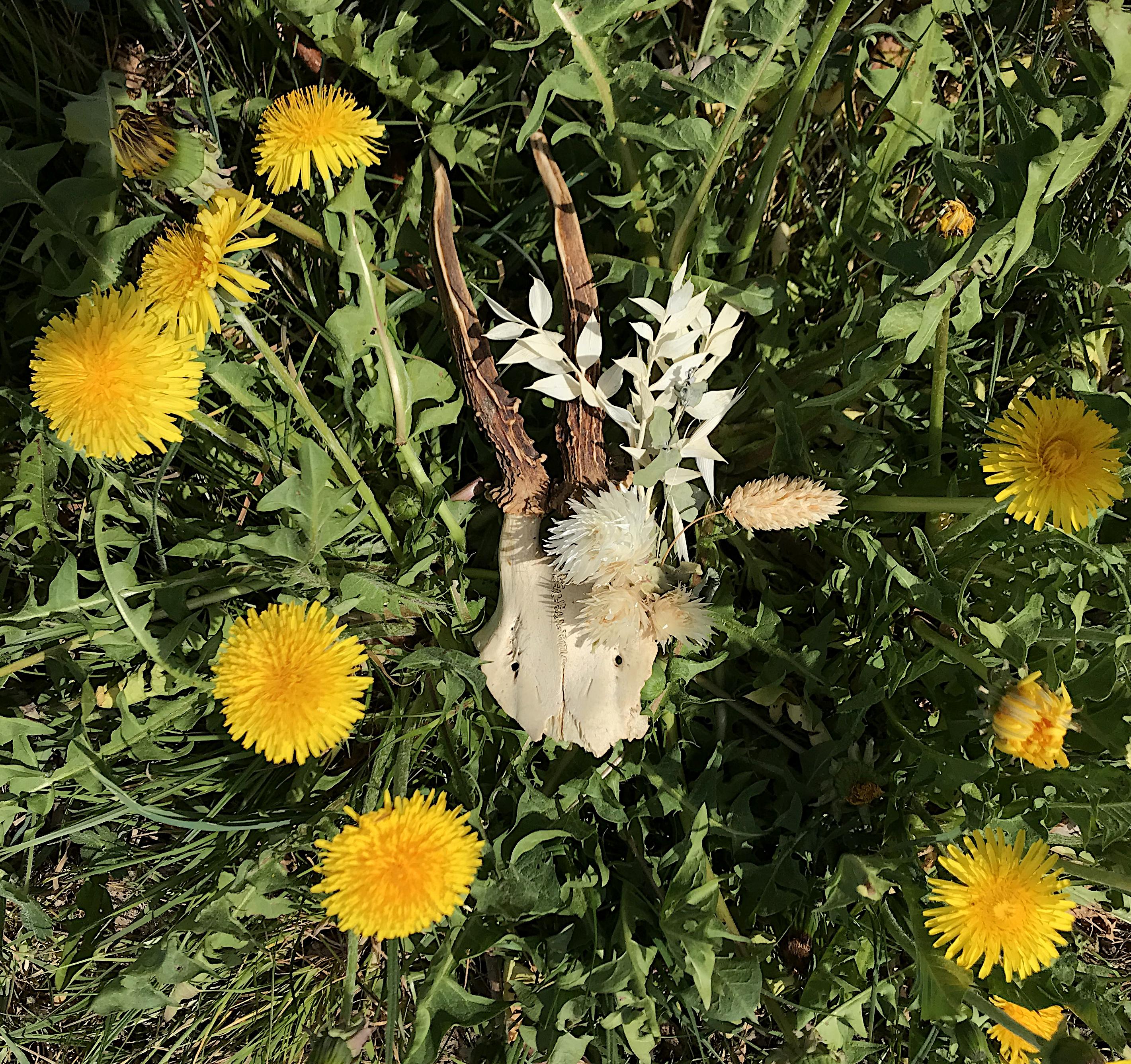Crâne, mlam, noiram, création organique, fleurs séchées