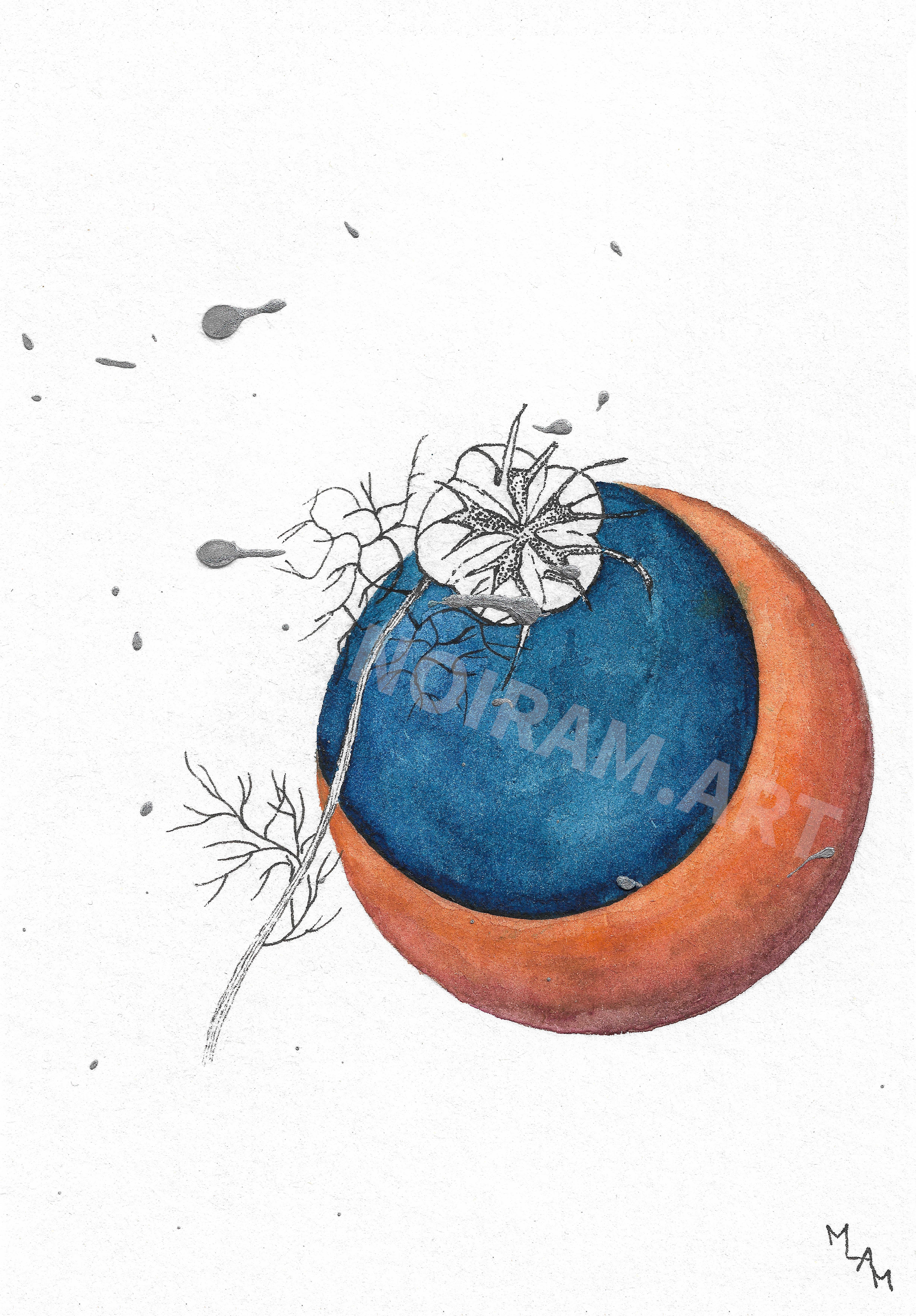 Aquarelle lune d'automne nigelle planète plante mlam noiram marion-lorraine poncet
