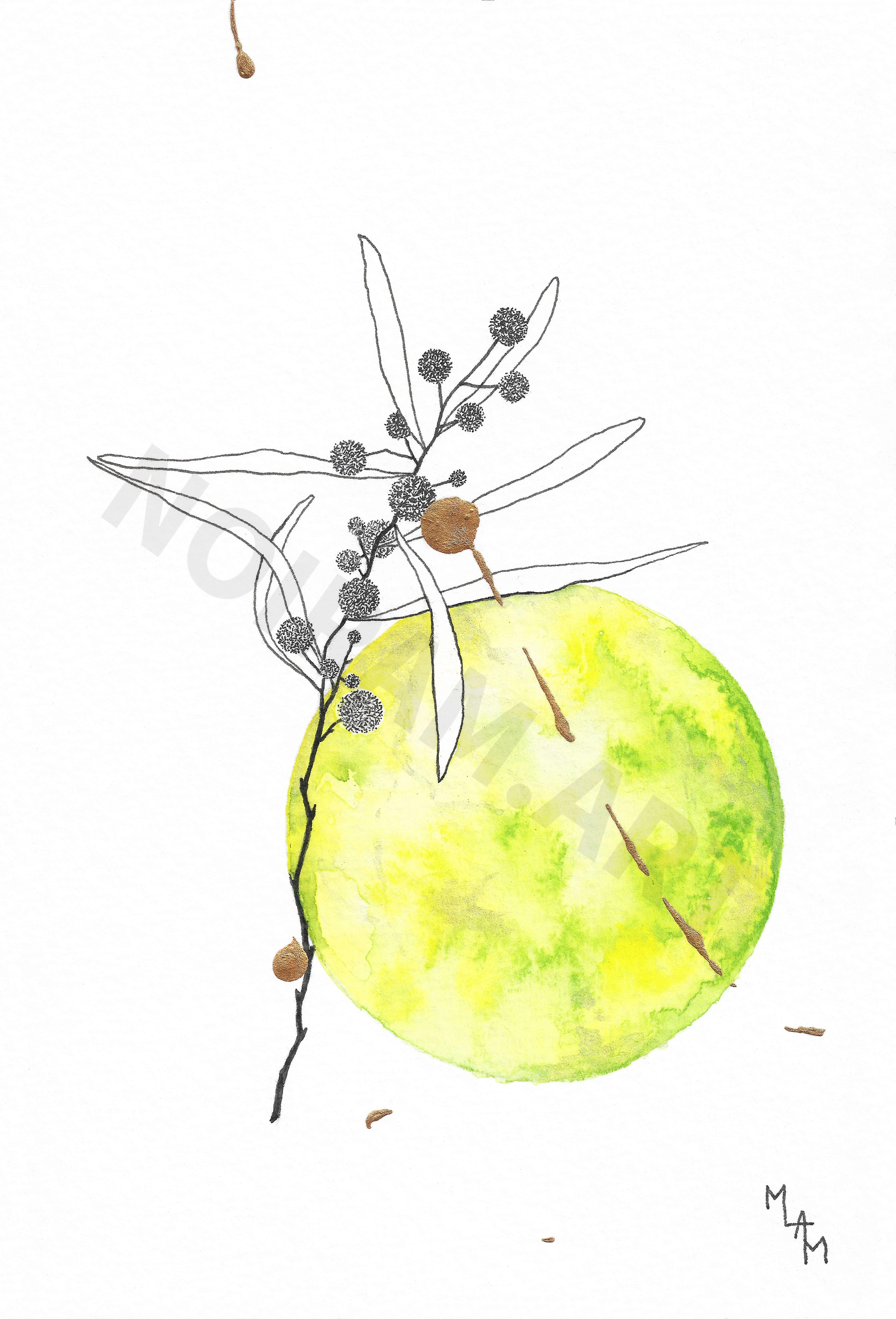 mlam marion-lorraine poncet noiram aquarelle mimosa nul ne sait à quel point je t'aime planète